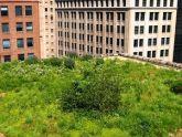 Giải pháp cho thành phố xanh