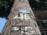 Hà Nội đối xử thô bạo với cây xanh