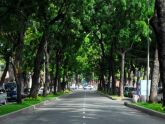 Quy hoạch cây xanh đô thị cần tính đến yếu tố thiên tai